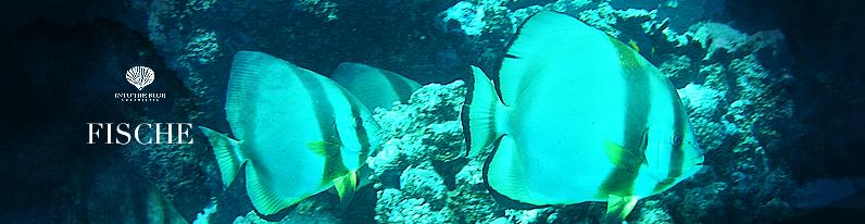 Fische Titel