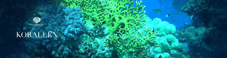 Korallen Titel
